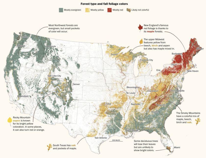 I.S. Map of fall Foliage for Washington Post